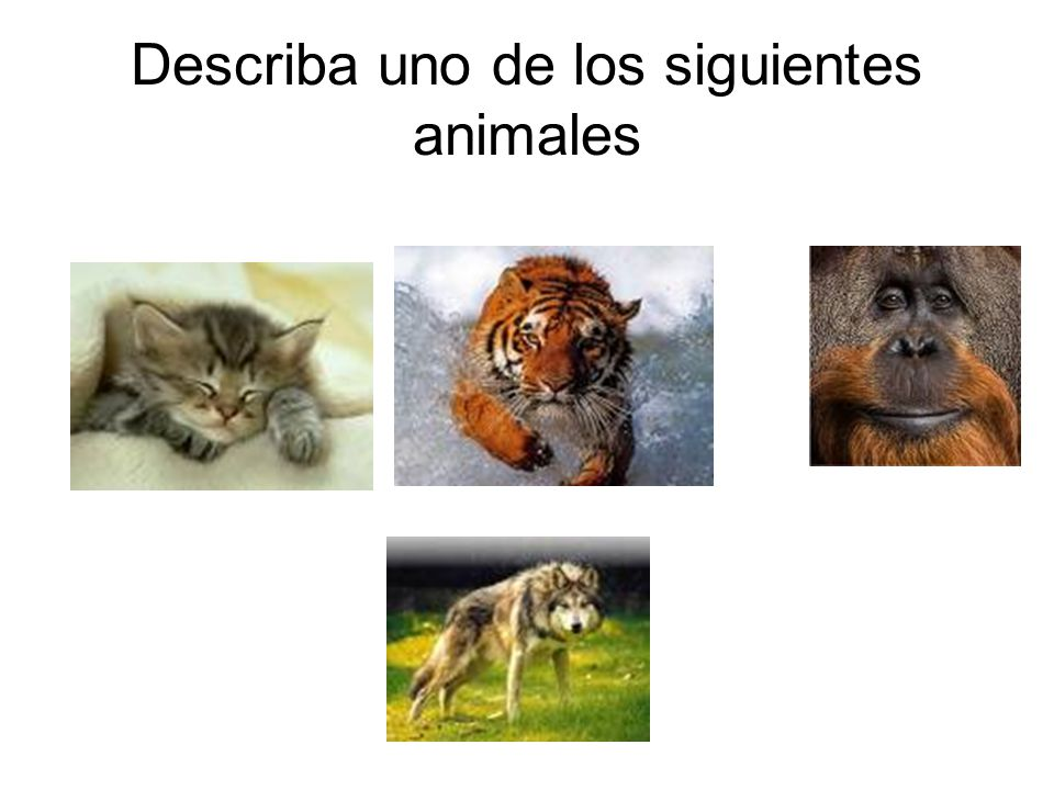 Describa uno de los siguientes animales