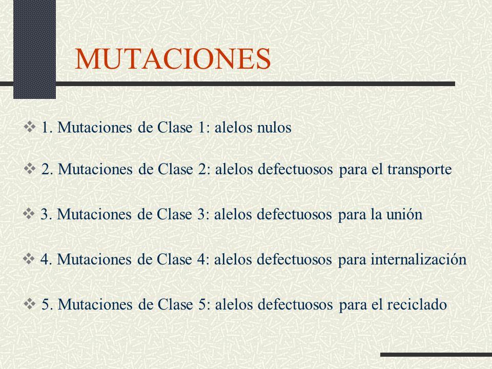 MUTACIONES 1. Mutaciones de Clase 1: alelos nulos