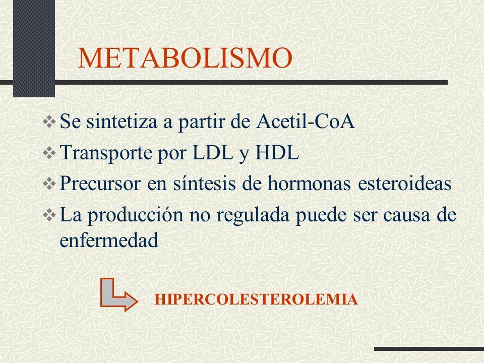 METABOLISMO Se sintetiza a partir de Acetil-CoA