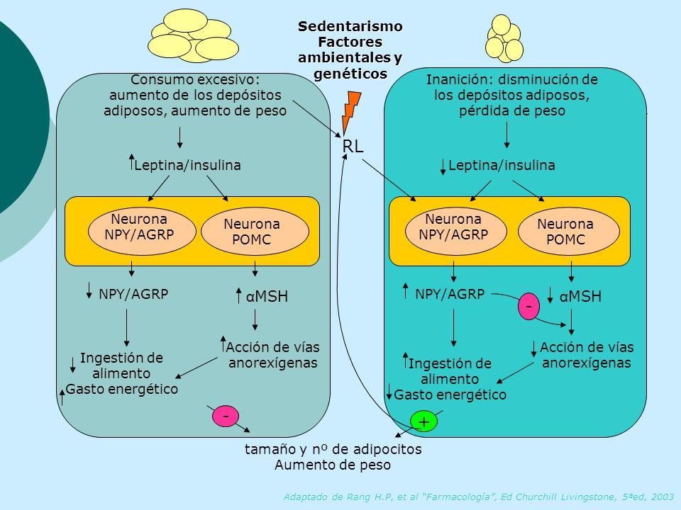 Factores ambientales y genéticos