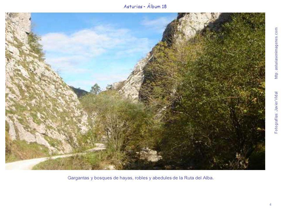 Gargantas y bosques de hayas, robles y abedules de la Ruta del Alba.