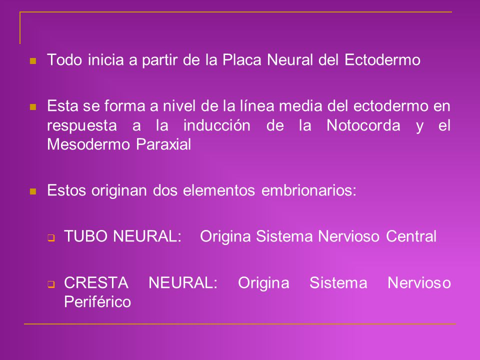 Todo inicia a partir de la Placa Neural del Ectodermo