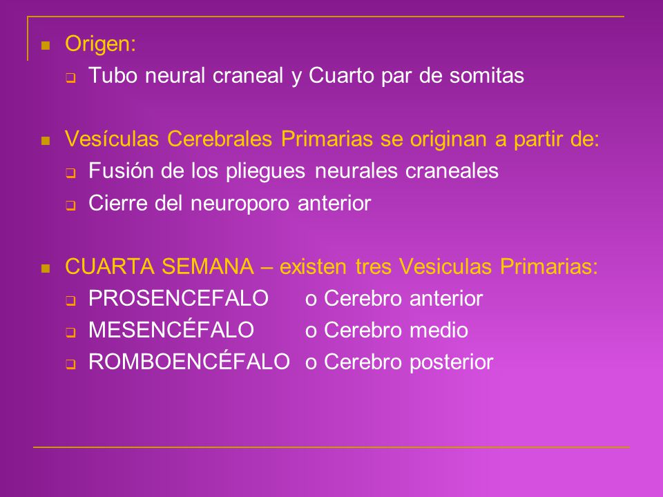 Origen: Tubo neural craneal y Cuarto par de somitas. Vesículas Cerebrales Primarias se originan a partir de: