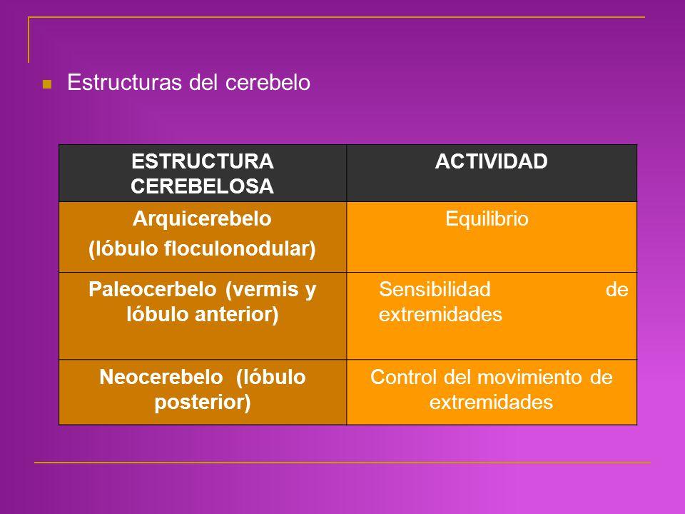 Estructuras del cerebelo