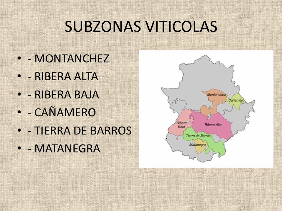 SUBZONAS VITICOLAS - MONTANCHEZ - RIBERA ALTA - RIBERA BAJA - CAÑAMERO