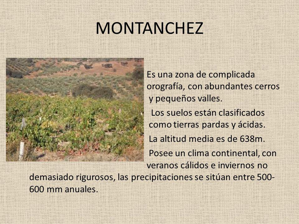 MONTANCHEZ