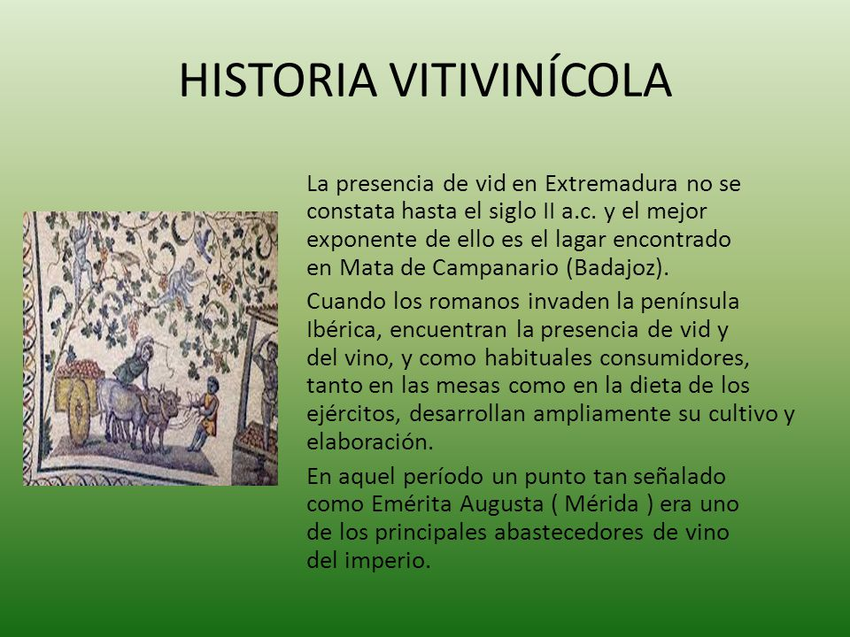 HISTORIA VITIVINÍCOLA
