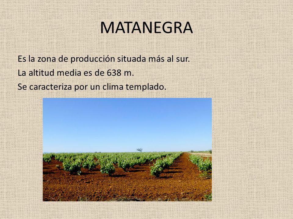 MATANEGRA Es la zona de producción situada más al sur.