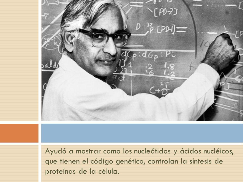 Ayudó a mostrar como los nucleótidos y ácidos nucléicos, que tienen el código genético, controlan la síntesis de proteínas de la célula.