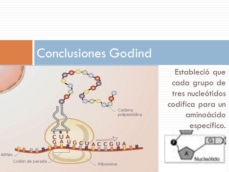 Conclusiones Godind Estableció que cada grupo de tres nucleótidos codifica para un aminoácido específico.