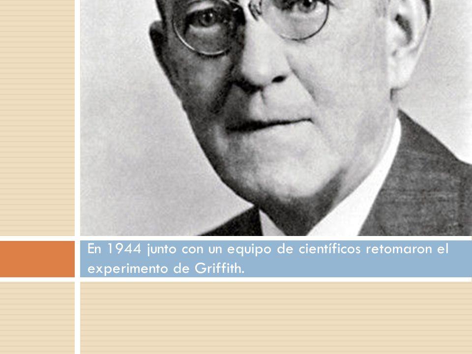 En 1944 junto con un equipo de científicos retomaron el experimento de Griffith.