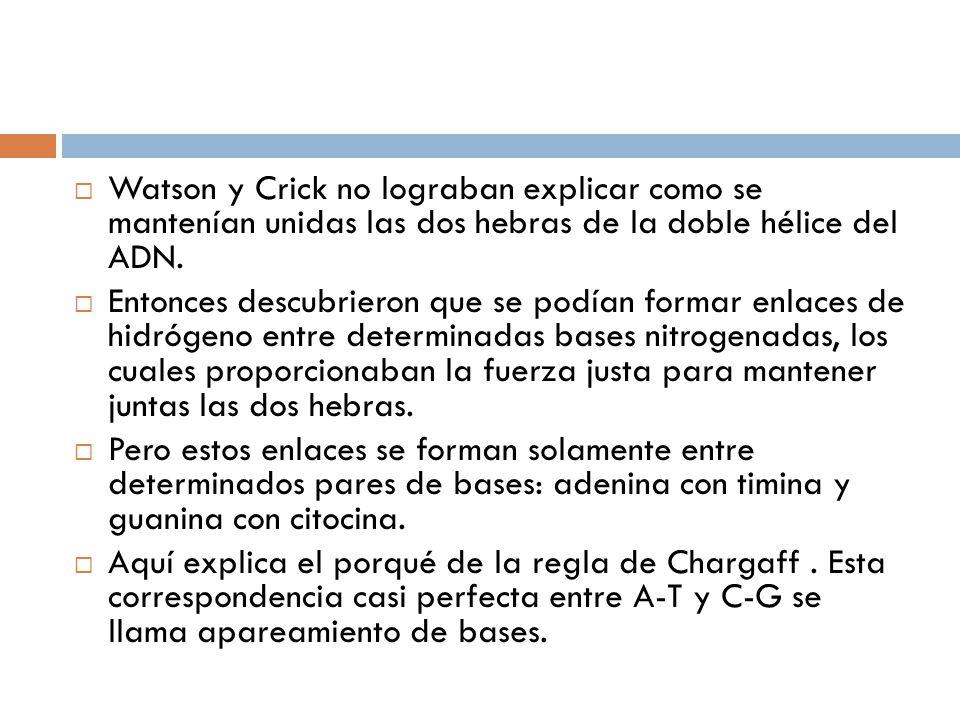 Watson y Crick no lograban explicar como se mantenían unidas las dos hebras de la doble hélice del ADN.