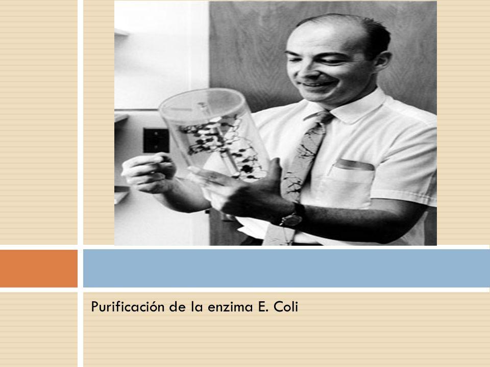 Purificación de la enzima E. Coli