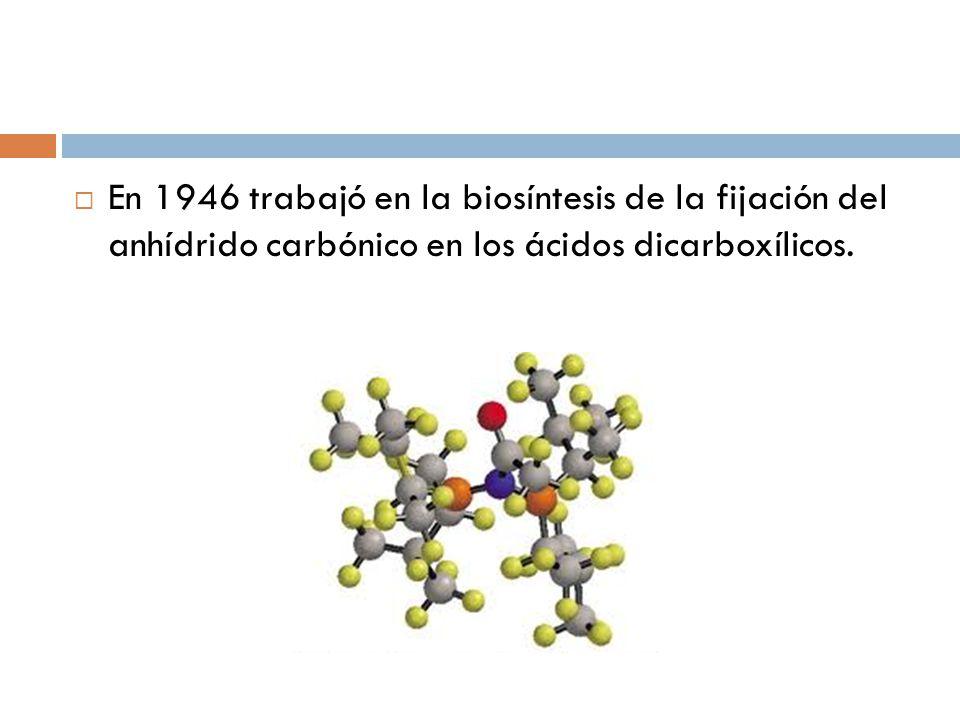 En 1946 trabajó en la biosíntesis de la fijación del anhídrido carbónico en los ácidos dicarboxílicos.