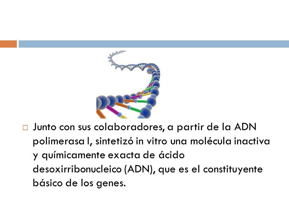 Junto con sus colaboradores, a partir de la ADN polimerasa I, sintetizó in vitro una molécula inactiva y químicamente exacta de ácido desoxirribonucleico (ADN), que es el constituyente básico de los genes.
