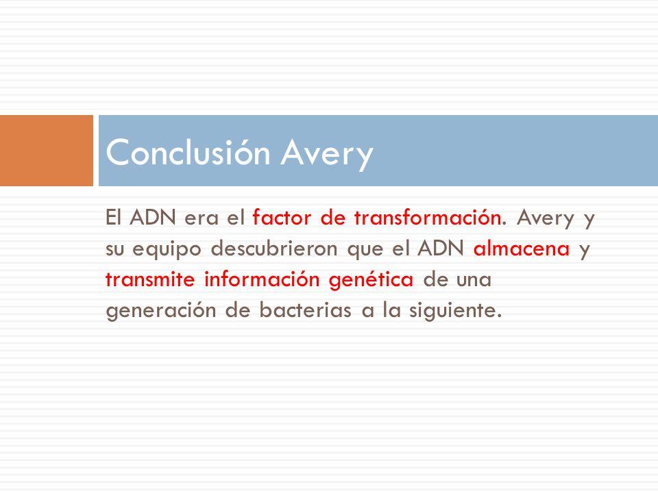 Conclusión Avery
