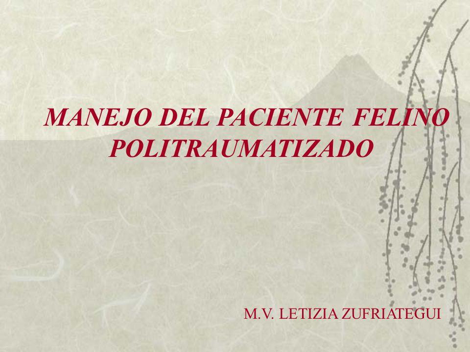 MANEJO DEL PACIENTE FELINO POLITRAUMATIZADO