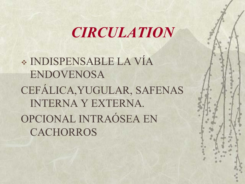 CIRCULATION INDISPENSABLE LA VÍA ENDOVENOSA