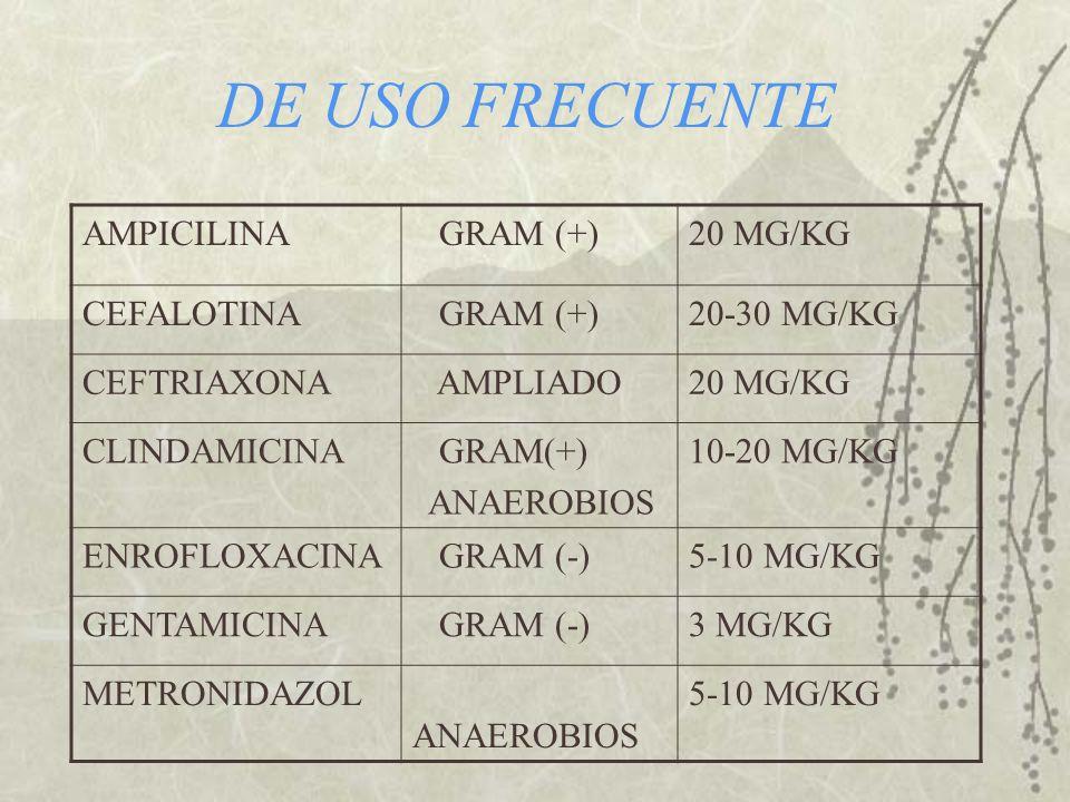 DE USO FRECUENTE AMPICILINA GRAM (+) 20 MG/KG CEFALOTINA 20-30 MG/KG