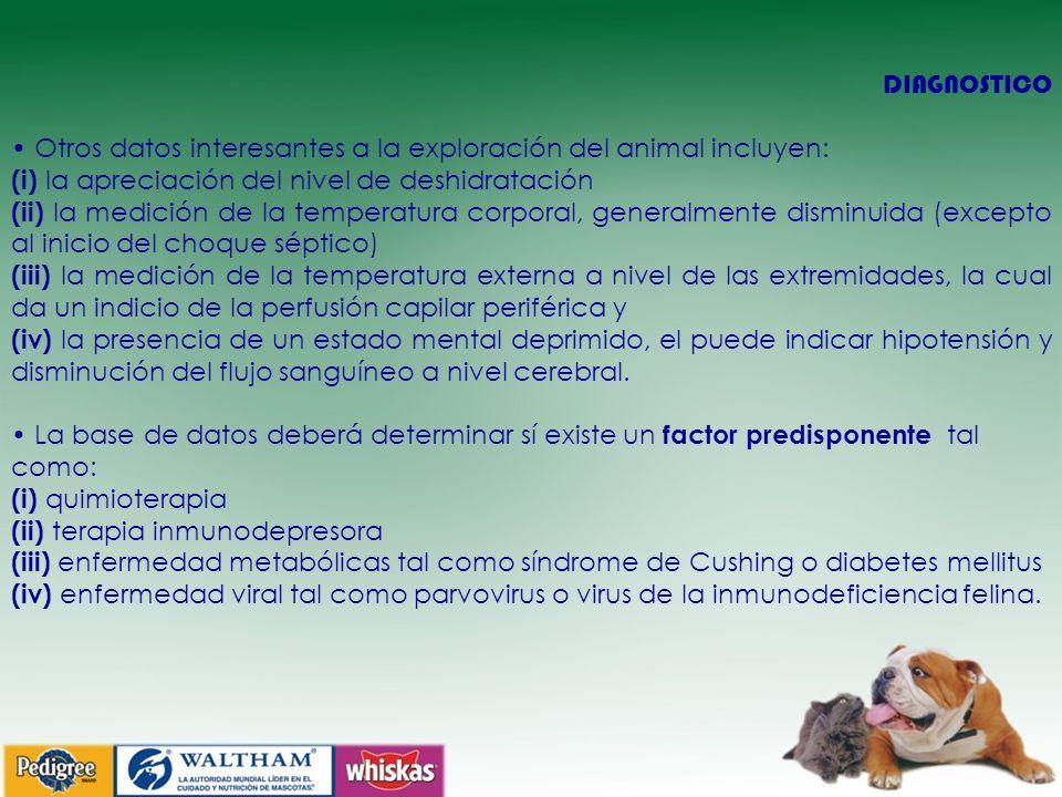 DIAGNOSTICO • Otros datos interesantes a la exploración del animal incluyen: (i) la apreciación del nivel de deshidratación.