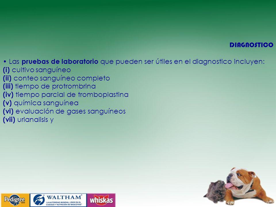 DIAGNOSTICO • Las pruebas de laboratorio que pueden ser útiles en el diagnostico incluyen: (i) cultivo sanguíneo.