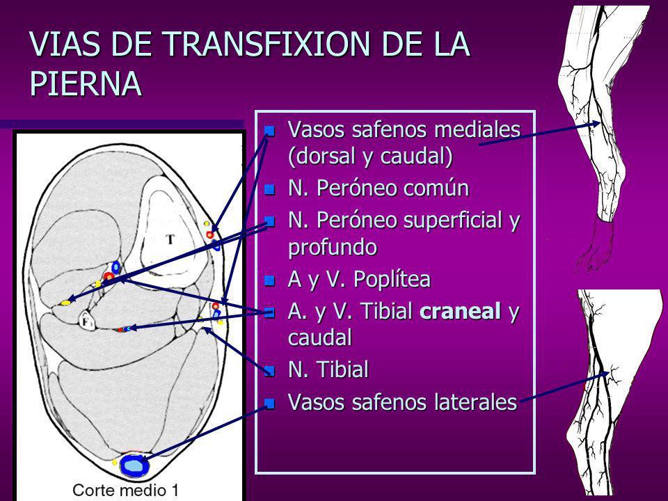 VIAS DE TRANSFIXION DE LA PIERNA