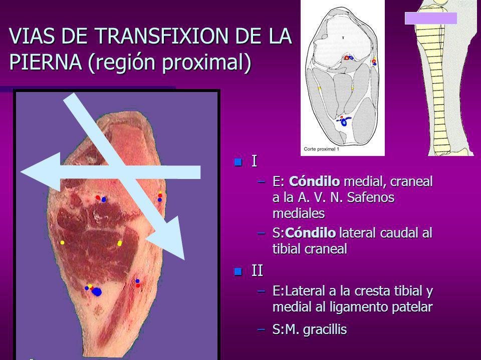 VIAS DE TRANSFIXION DE LA PIERNA (región proximal)