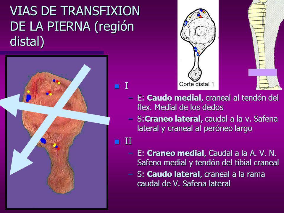 VIAS DE TRANSFIXION DE LA PIERNA (región distal)