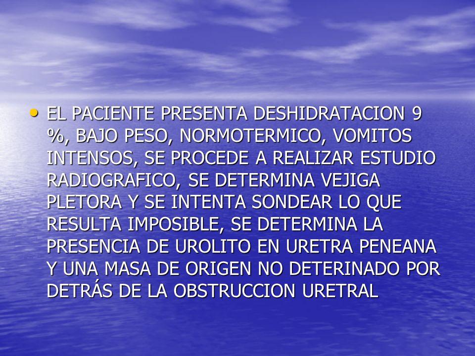 EL PACIENTE PRESENTA DESHIDRATACION 9 %, BAJO PESO, NORMOTERMICO, VOMITOS INTENSOS, SE PROCEDE A REALIZAR ESTUDIO RADIOGRAFICO, SE DETERMINA VEJIGA PLETORA Y SE INTENTA SONDEAR LO QUE RESULTA IMPOSIBLE, SE DETERMINA LA PRESENCIA DE UROLITO EN URETRA PENEANA Y UNA MASA DE ORIGEN NO DETERINADO POR DETRÁS DE LA OBSTRUCCION URETRAL