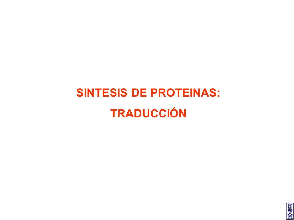 SINTESIS DE PROTEINAS: