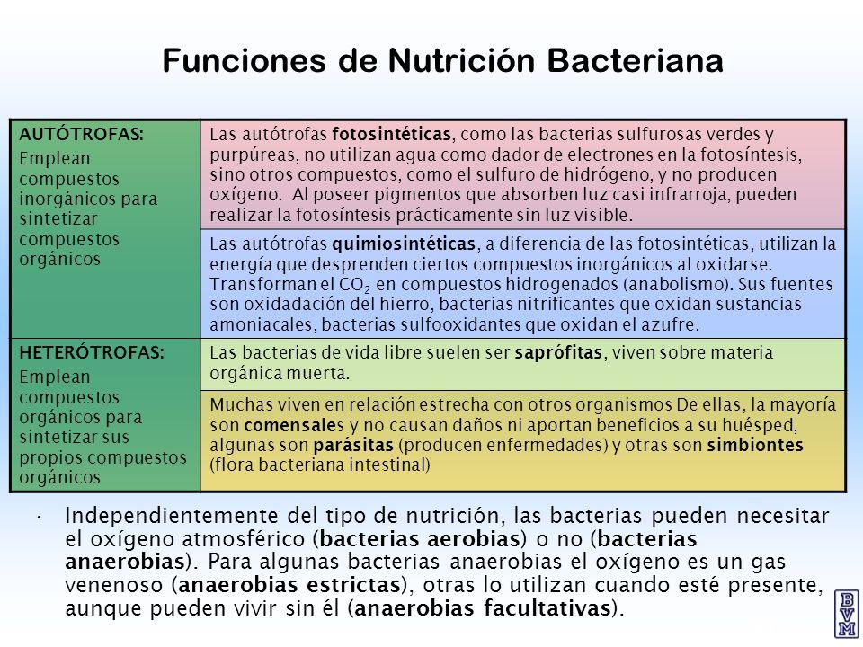 Funciones de Nutrición Bacteriana