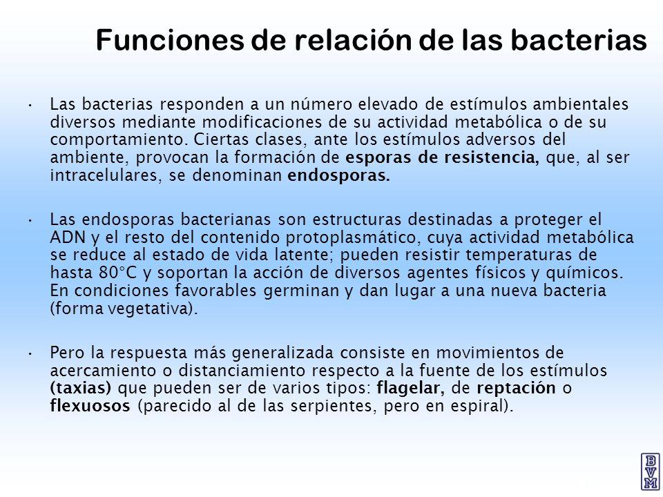 Funciones de relación de las bacterias
