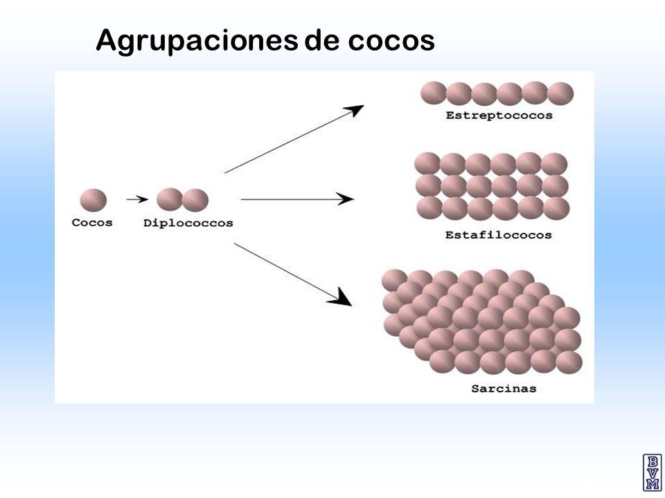 Agrupaciones de cocos