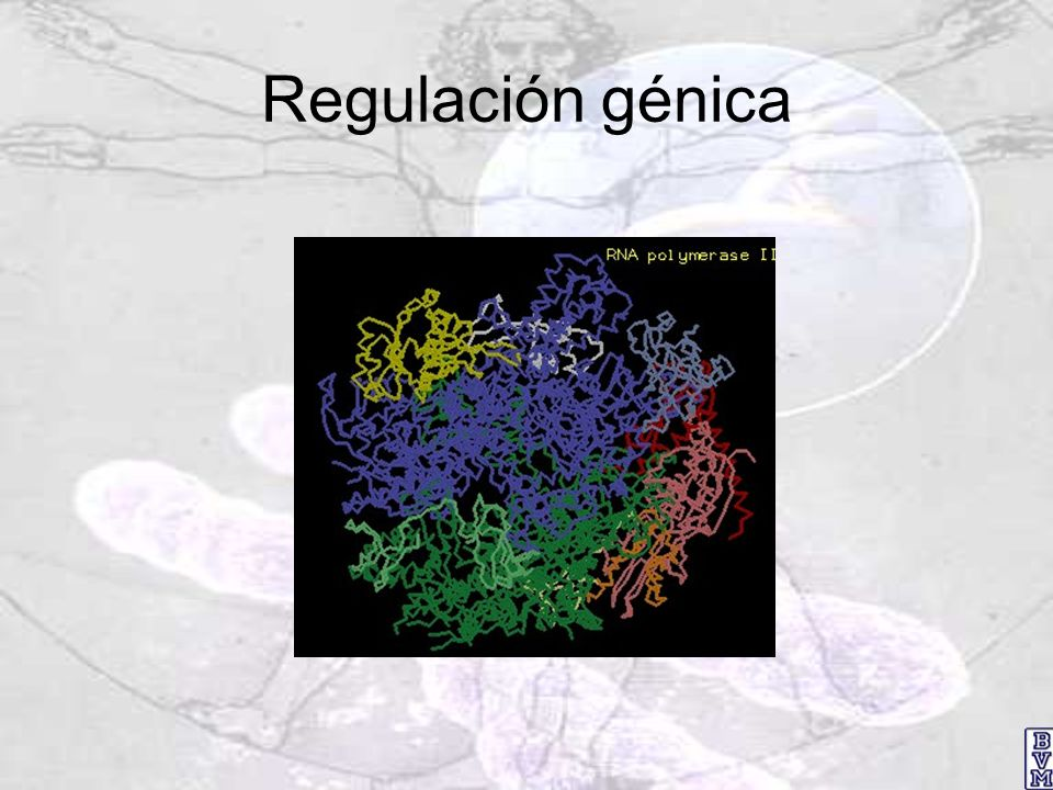 Regulación génica
