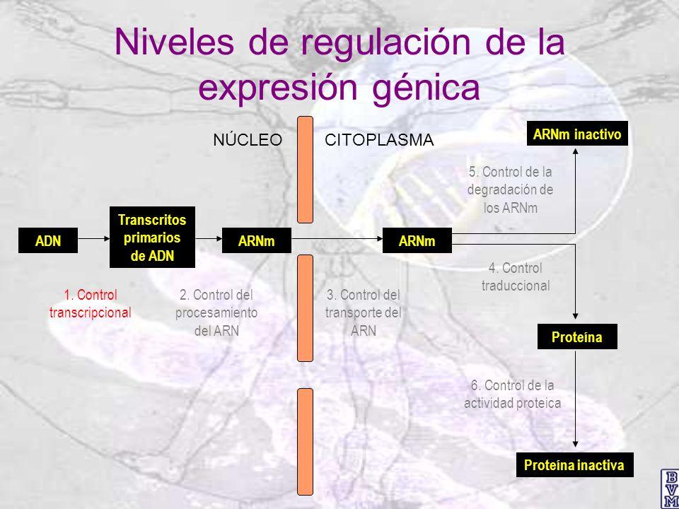 Niveles de regulación de la expresión génica