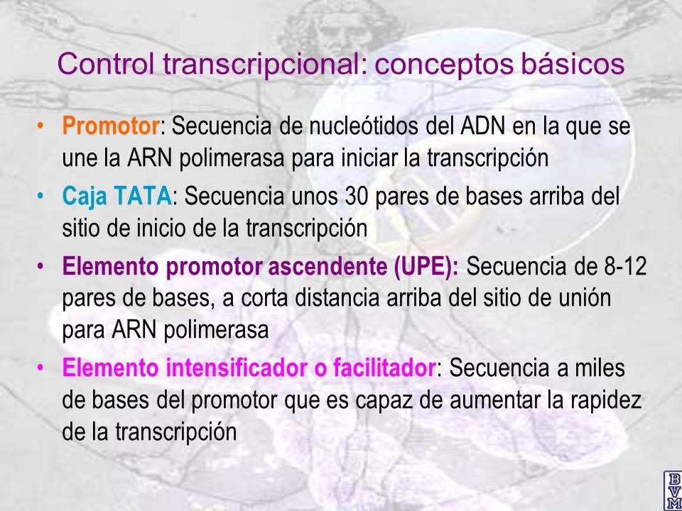 Control transcripcional: conceptos básicos