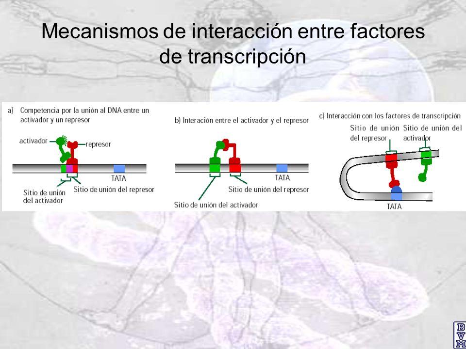 Mecanismos de interacción entre factores de transcripción