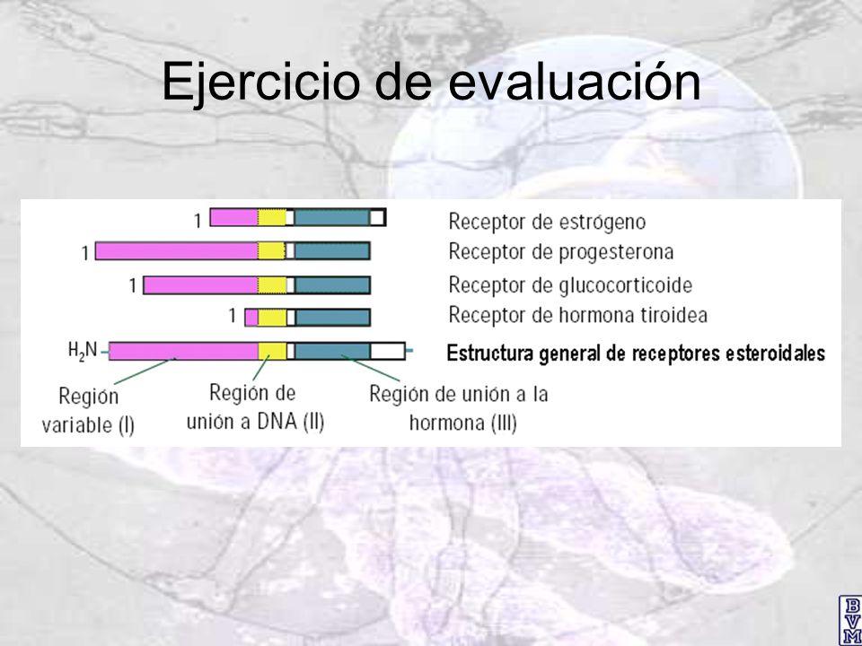 Ejercicio de evaluación