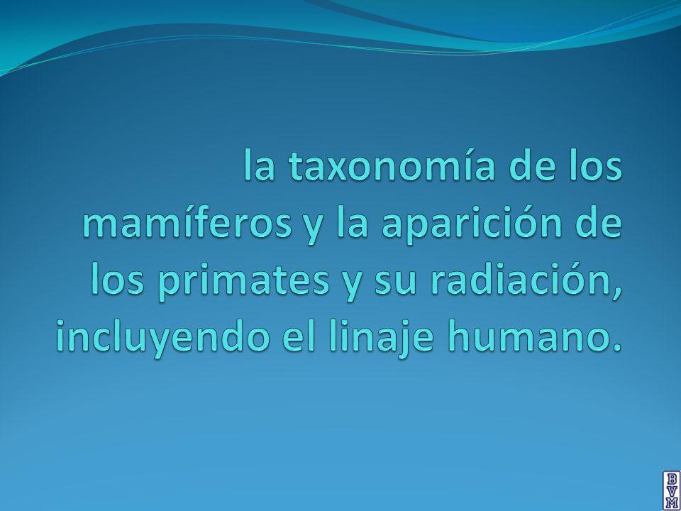 la taxonomía de los mamíferos y la aparición de los primates y su radiación, incluyendo el linaje humano.