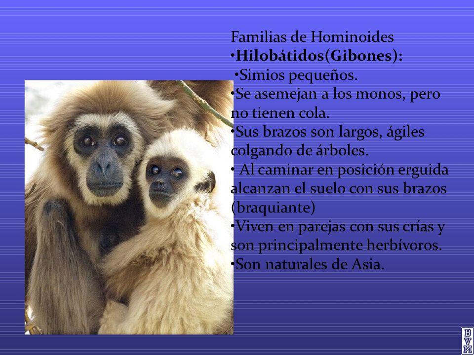 Familias de Hominoides