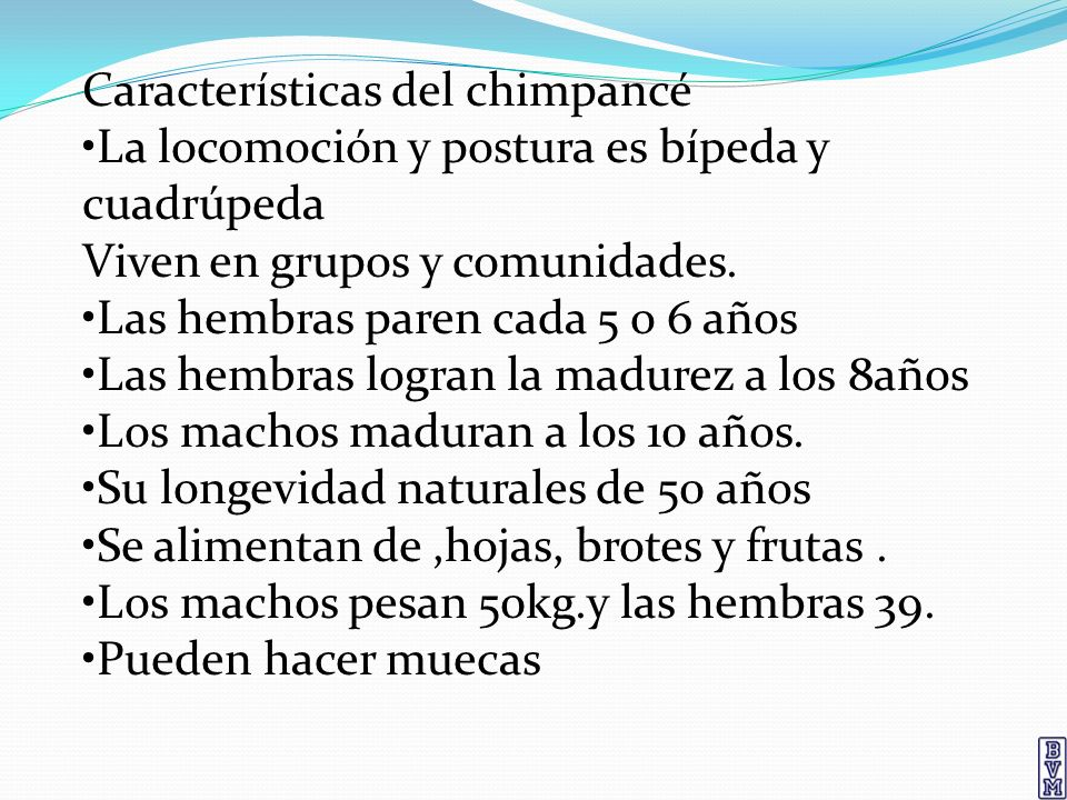 Características del chimpancé