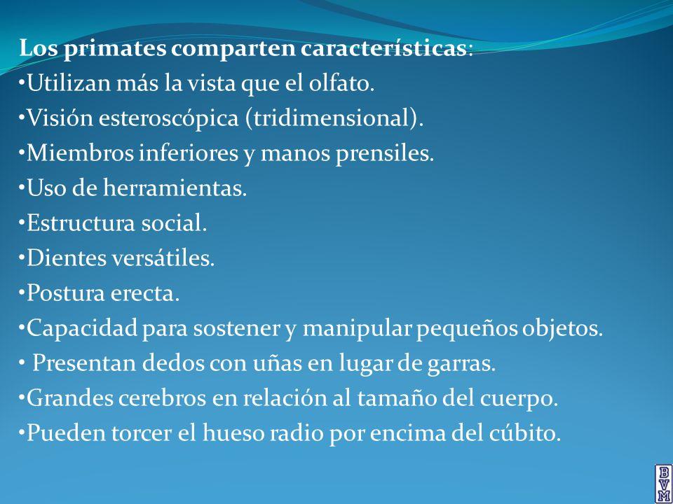 Los primates comparten características: