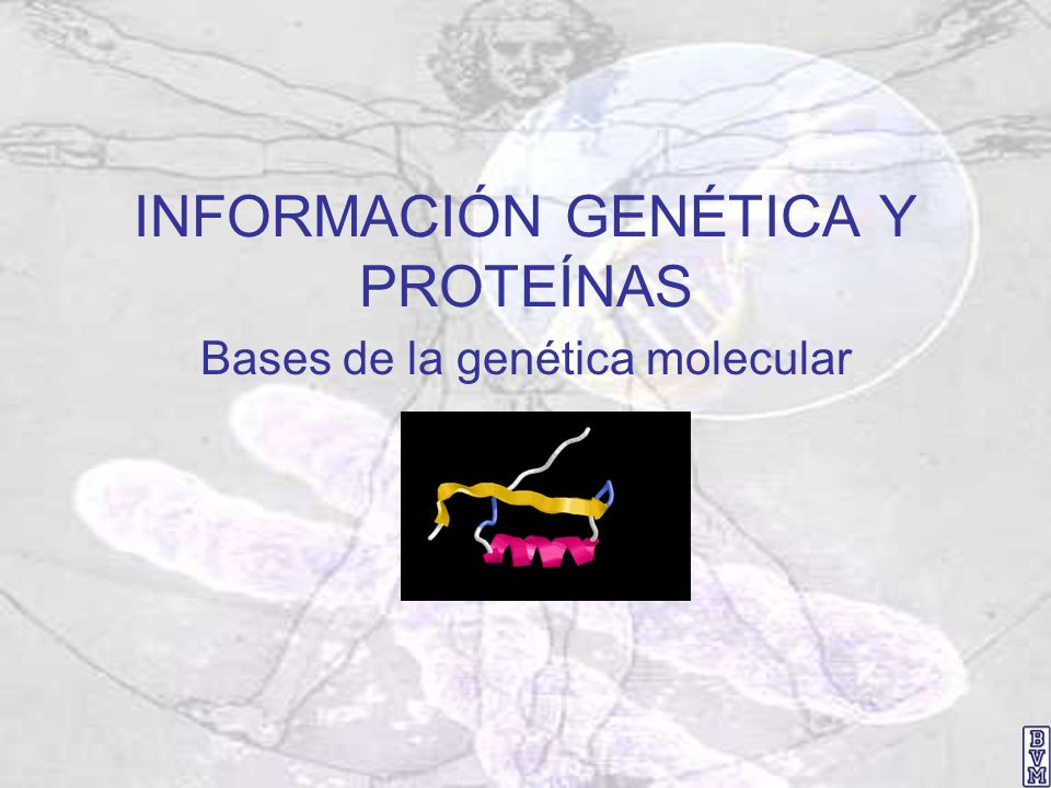 INFORMACIÓN GENÉTICA Y PROTEÍNAS