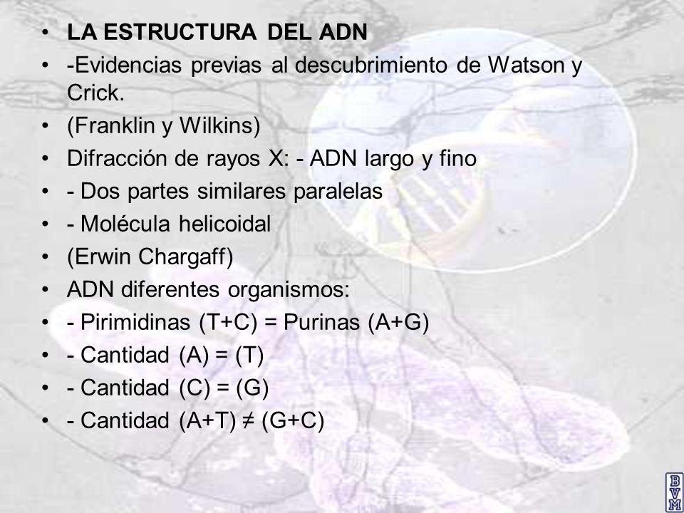 LA ESTRUCTURA DEL ADN -Evidencias previas al descubrimiento de Watson y Crick. (Franklin y Wilkins)