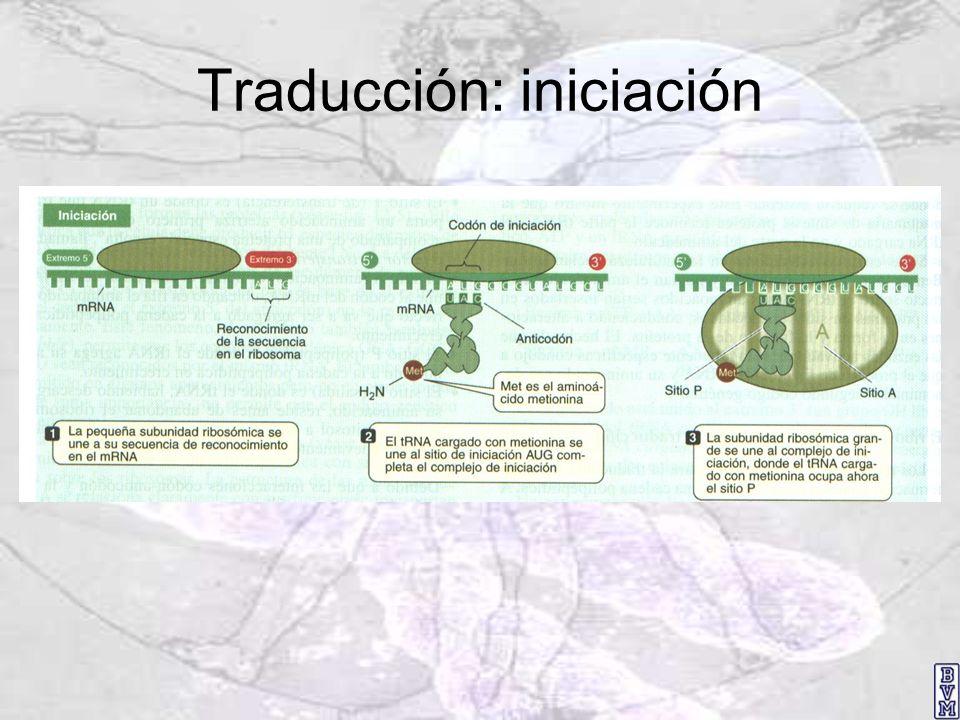 Traducción: iniciación
