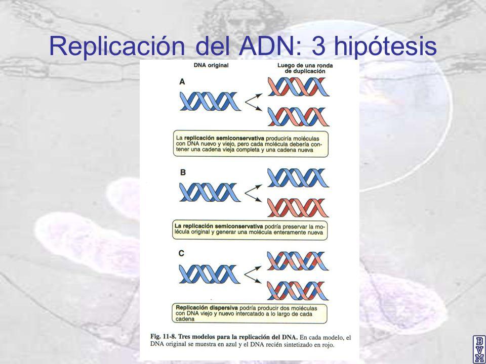 Replicación del ADN: 3 hipótesis