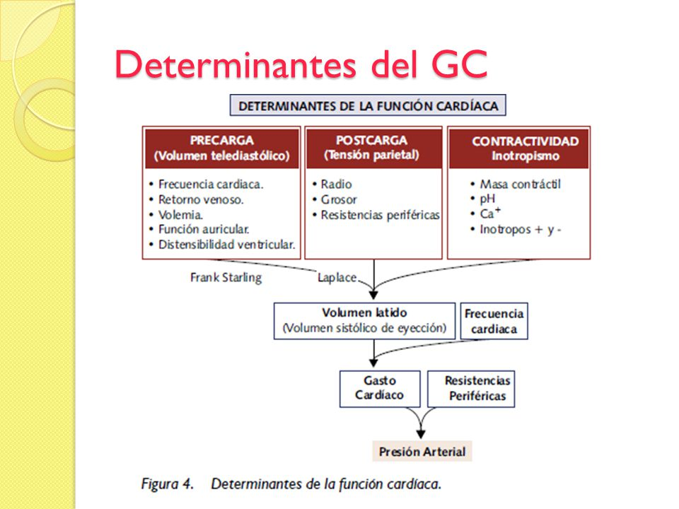 Determinantes del GC