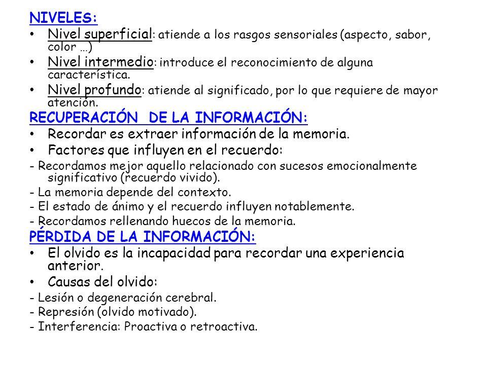 RECUPERACIÓN DE LA INFORMACIÓN: