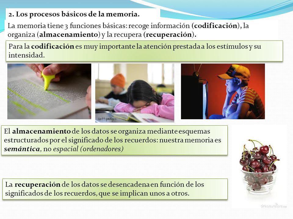 2. Los procesos básicos de la memoria.