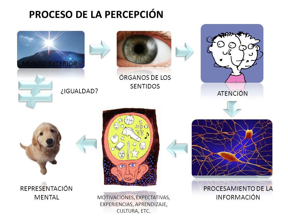 PROCESO DE LA PERCEPCIÓN